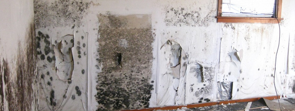 How to remove black mould from wall